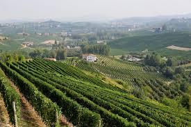 IL NETTARE DEGLI DEI ……..THE WINE