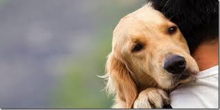 Il migliore amico dell'uomo...il cane!